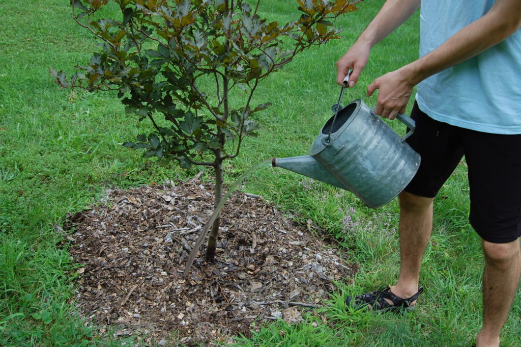 Make sure trees and shrubs get enough water in September.