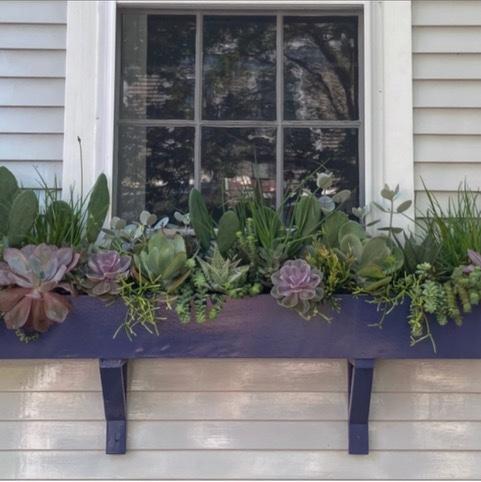 Succulents in a Nantucket window box