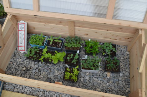 This cold frame helps grow new plants before they get planted into the ground.