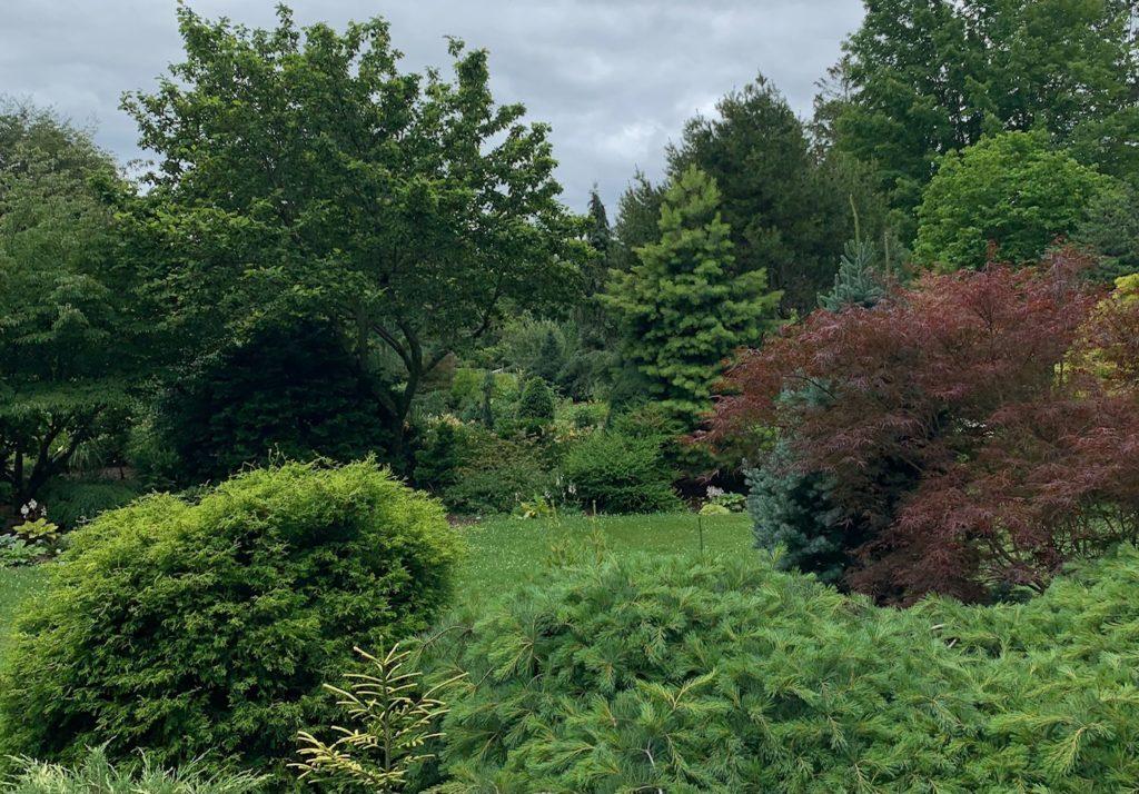 Les plantes des bois de John O'Brien