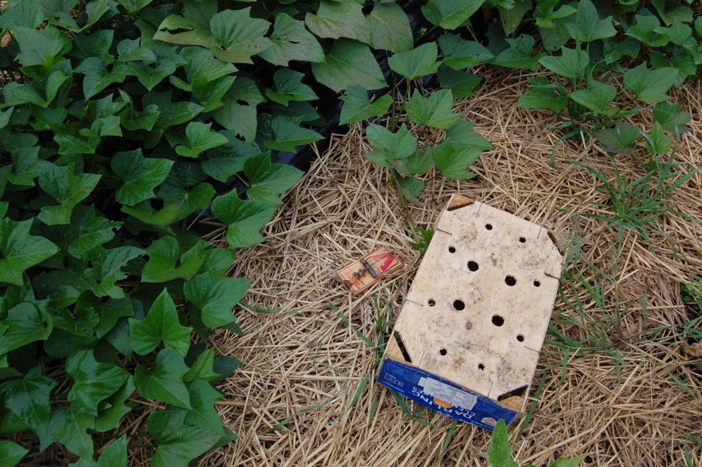 Trap for mice and voles