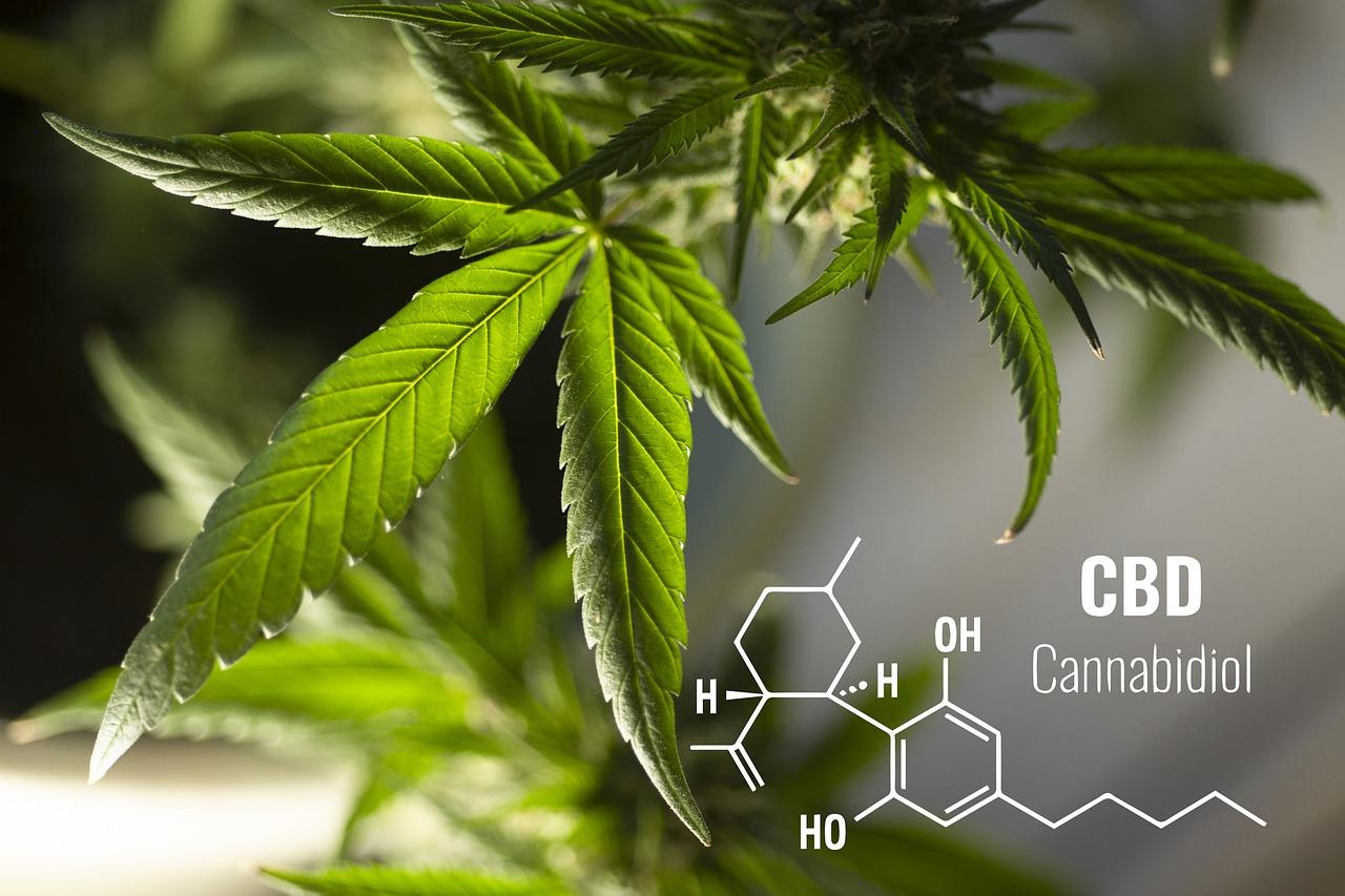 Cannabinoid Hyperemesis Syndrome: When cannabis causes the pain