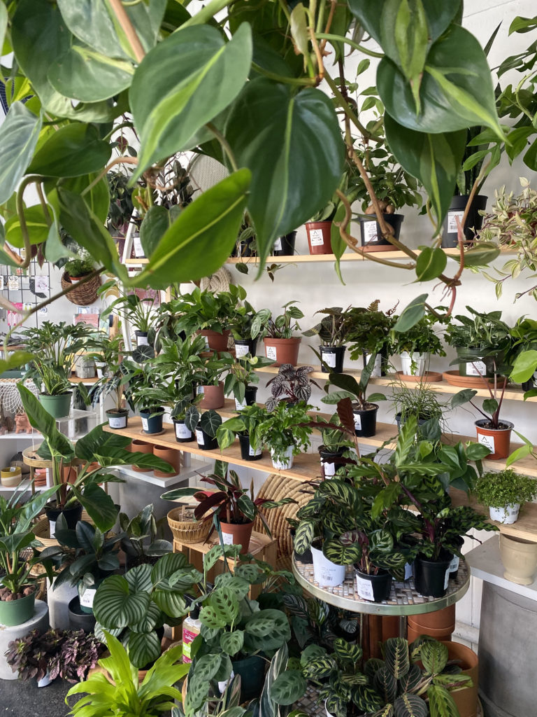 An indoor jungle at The Plant Connector in North Adams