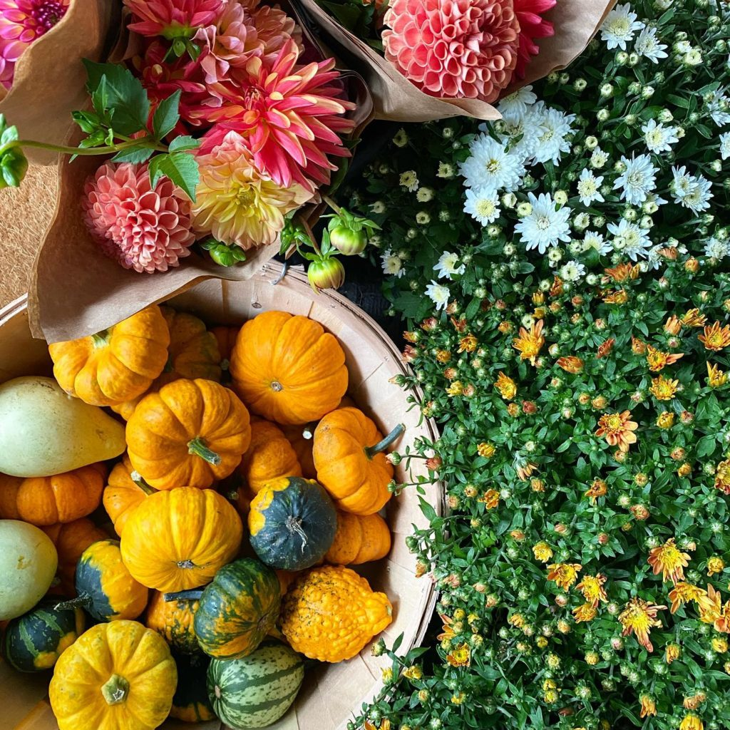 Pumbpkins and flowers from local farms near North Adams, Mass.